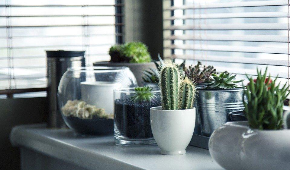 3 plantes qui aident à perdre du poids!